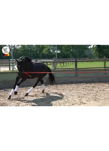 LUNGING AID EQUIBENDER...